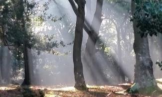 Sunlight-trees-leaves-500x300