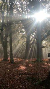Sunlight_trees